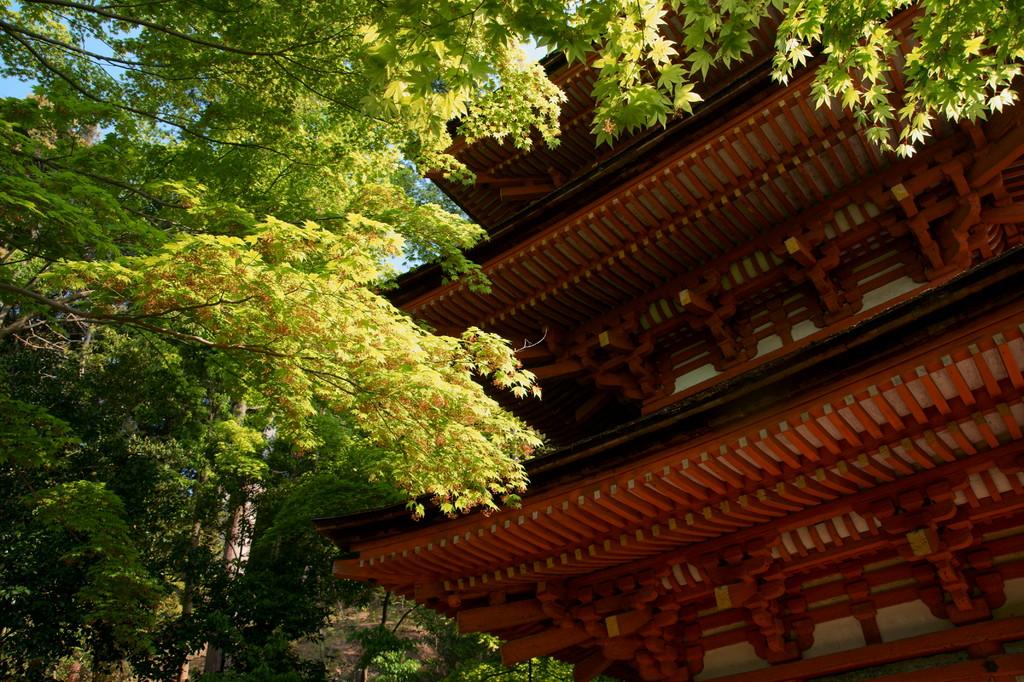 浄瑠璃寺にて(1)