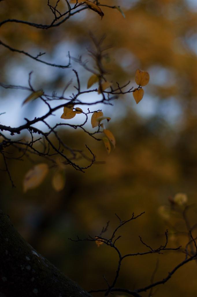 Scenery of autumn (1)