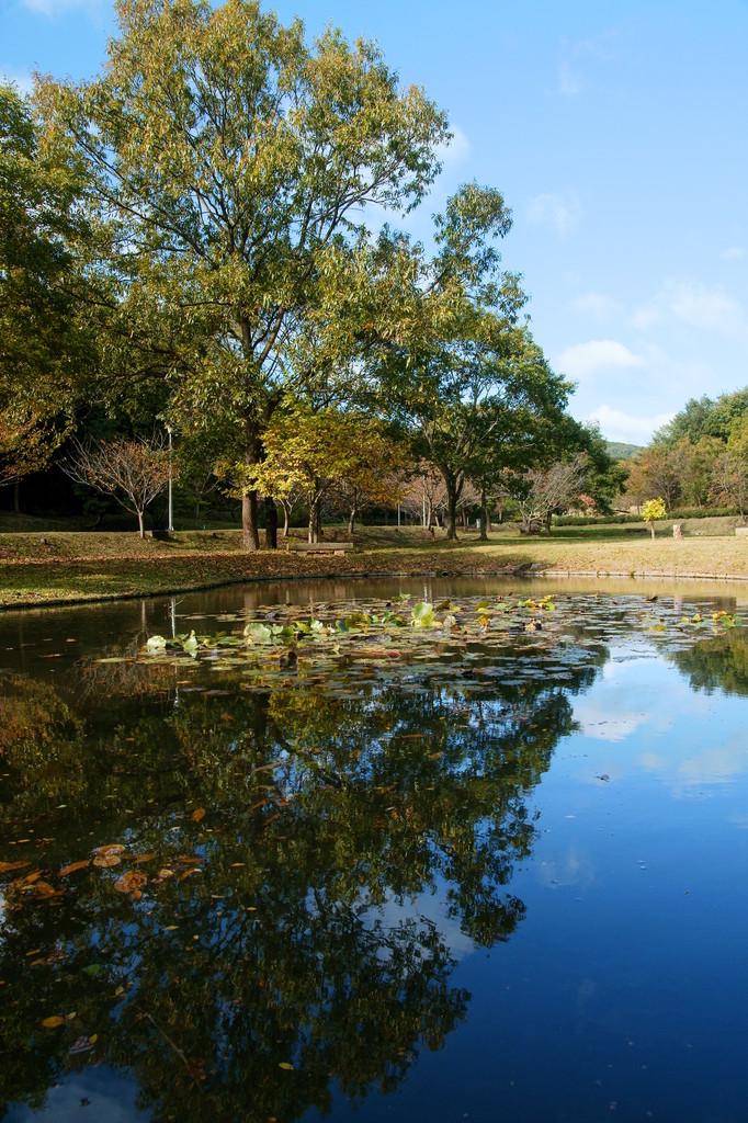 湖面の風景 (1)