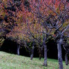 Scenery of autumn (4)