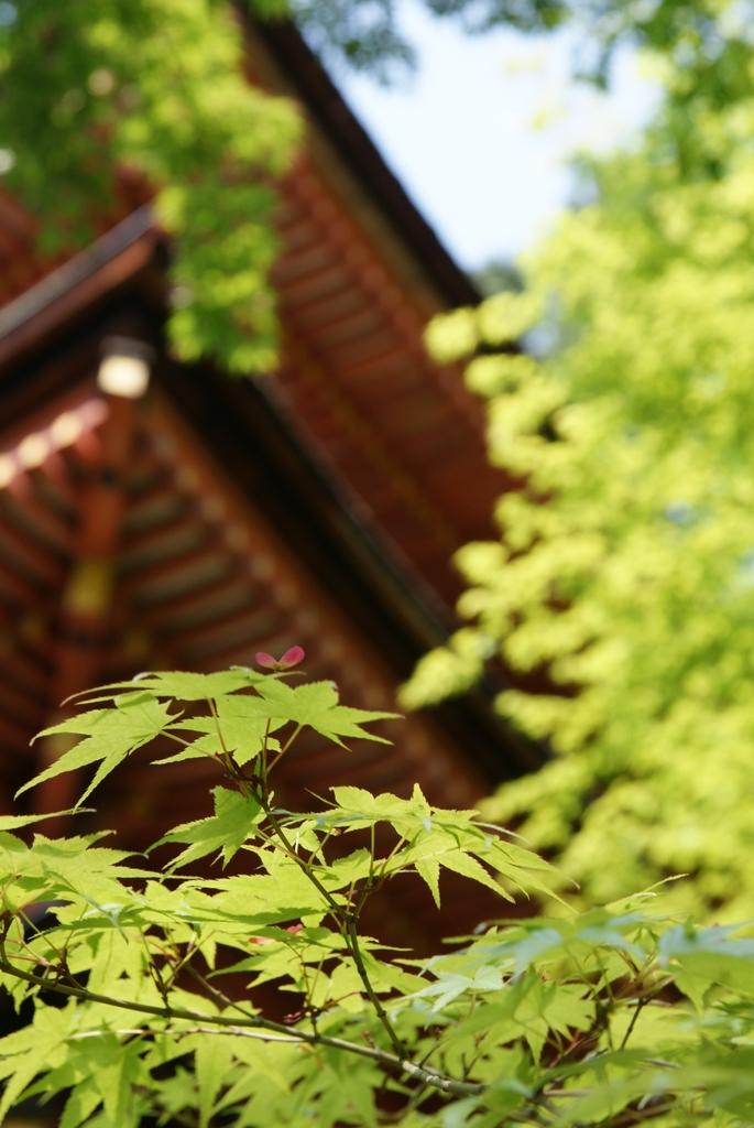 浄瑠璃寺にて(3)
