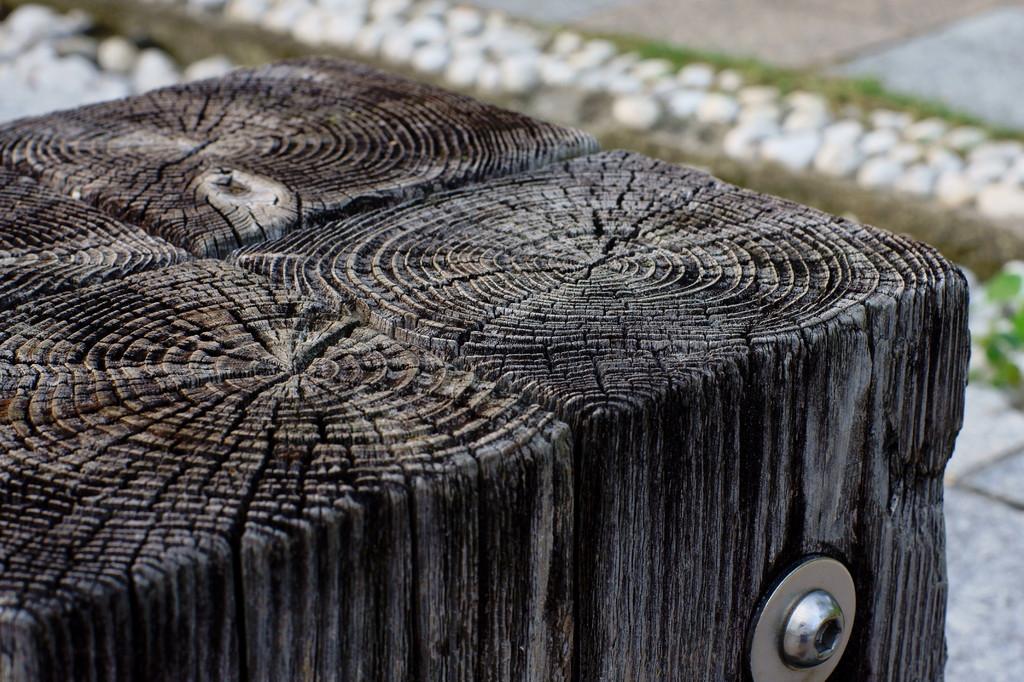 古木の腰掛