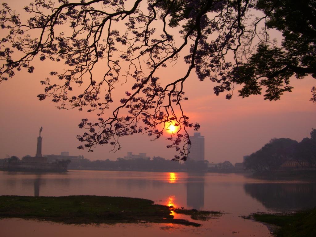 ジャカランダと夕日
