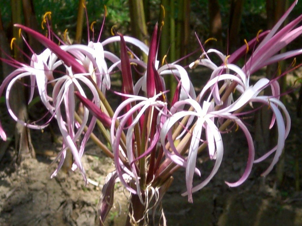マダガスカルの花