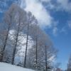 春先の樹氷