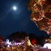 満月とイルミ