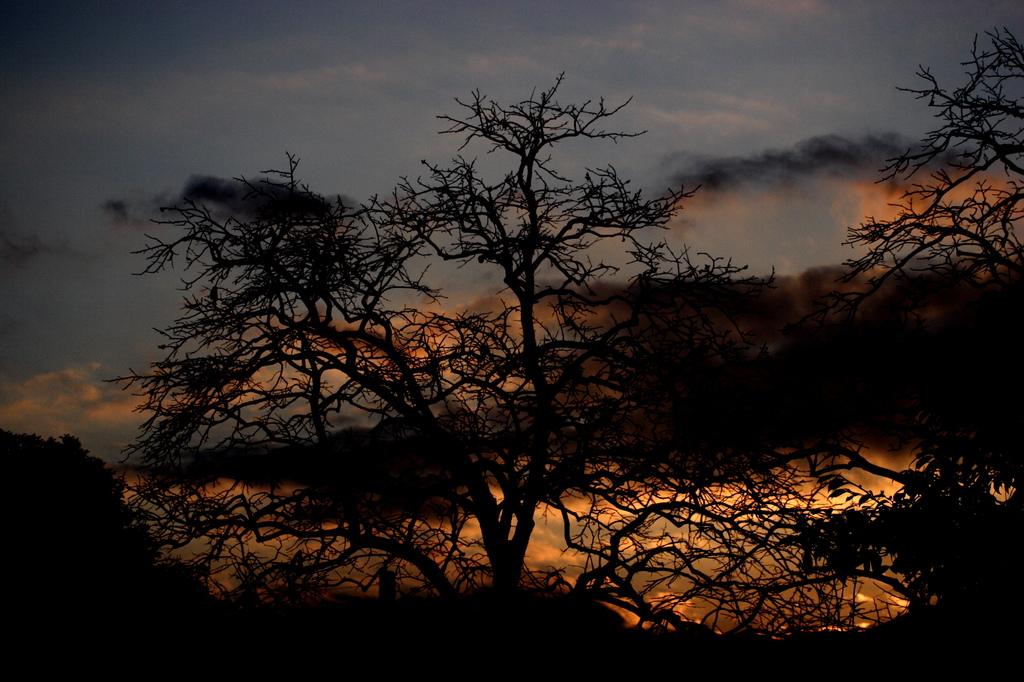 雲と夕日と落葉樹