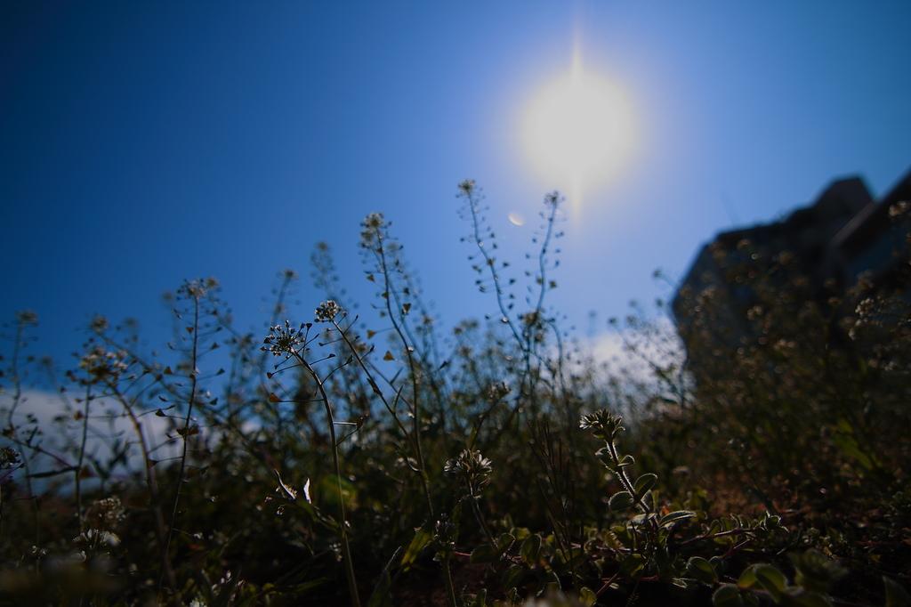 太陽と植物