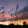 裏磐梯 小野川湖の朝