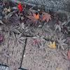 秋の残り香