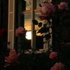 夕暮れと薔薇