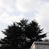 3本杉 Ⅱ