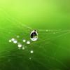 クモの巣と水滴 Ⅰ