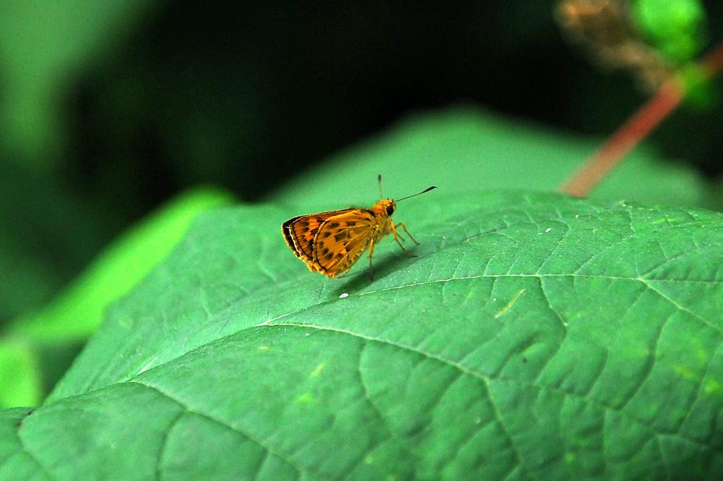 蝶ではないですが・・・Ⅰ