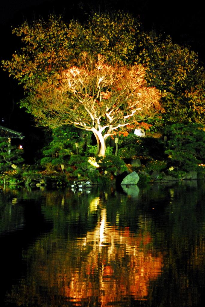 清澄庭園~ライトアップ~Ⅰ