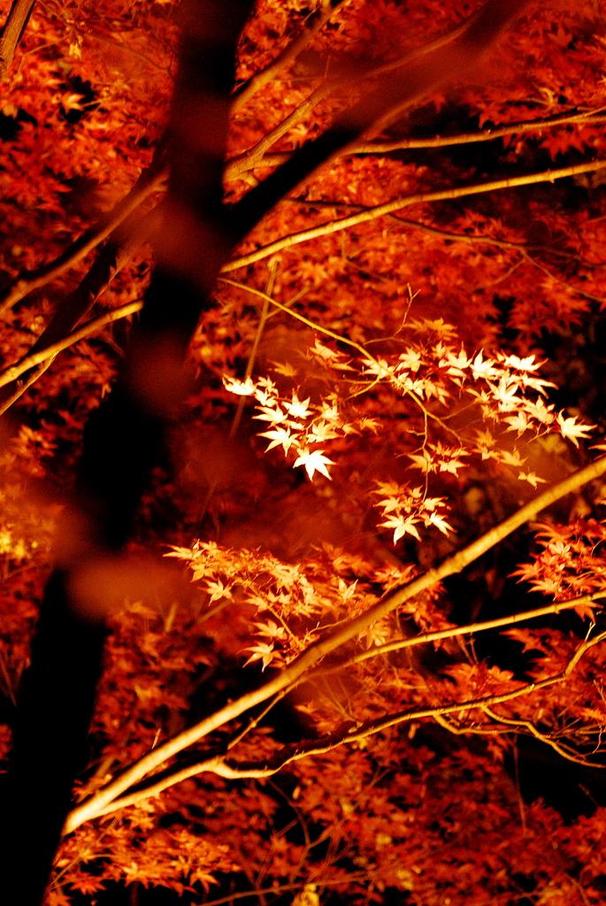 清澄庭園~ライトアップ~Ⅱ