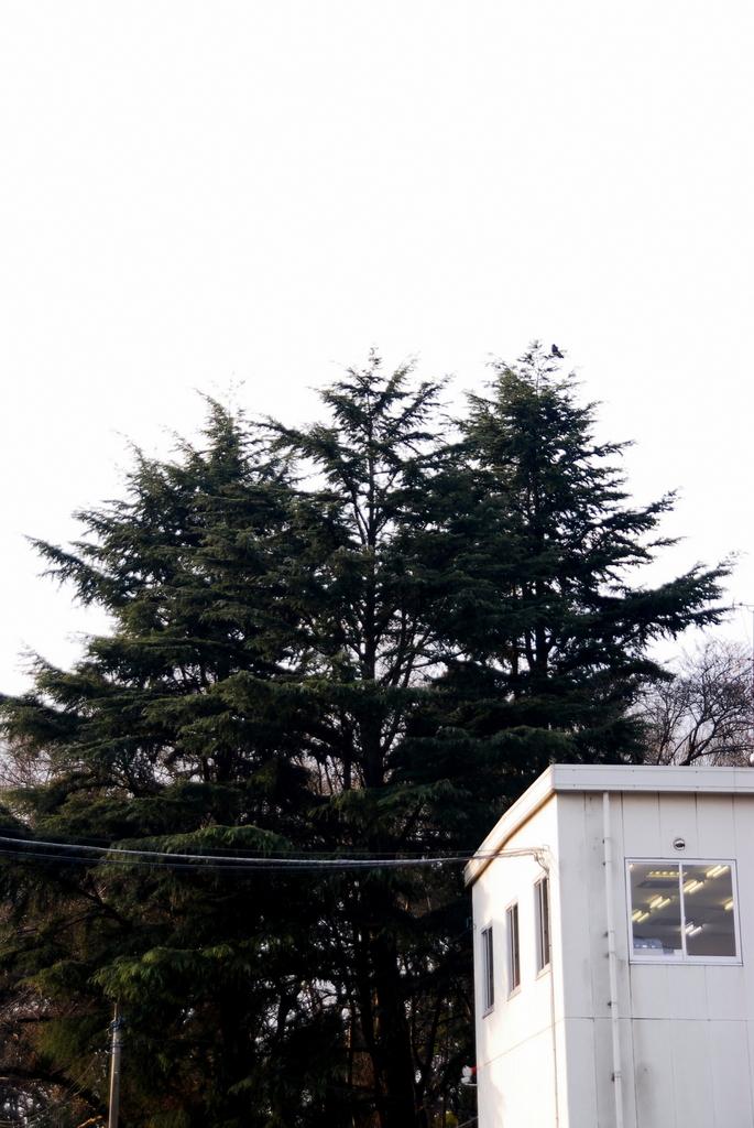 3本杉 Ⅰ