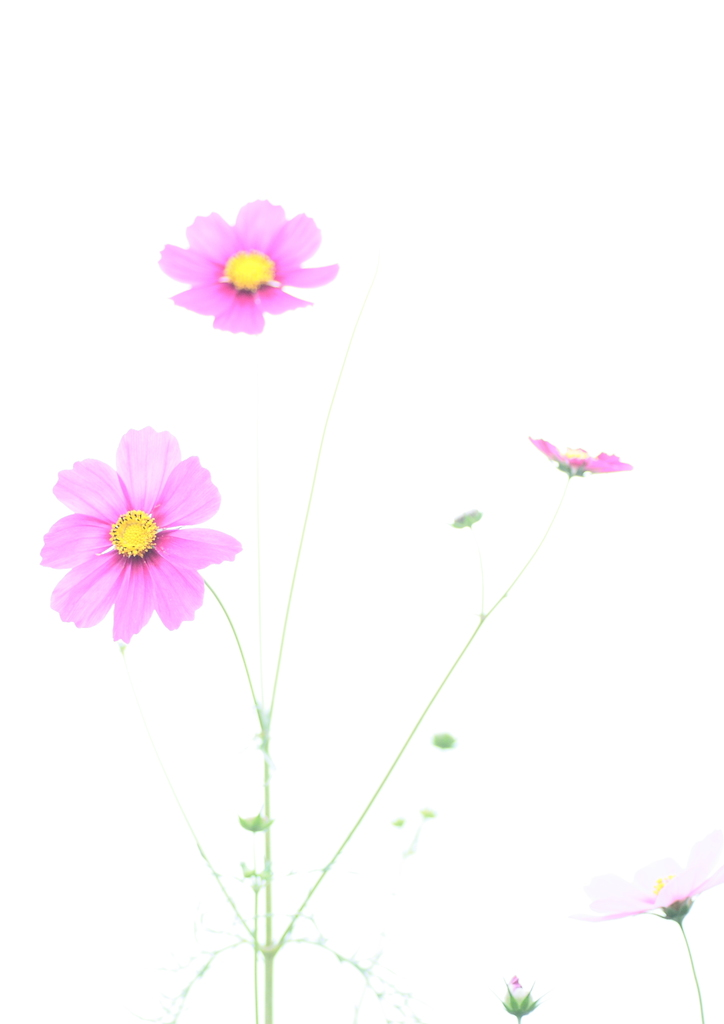 IMG_6349