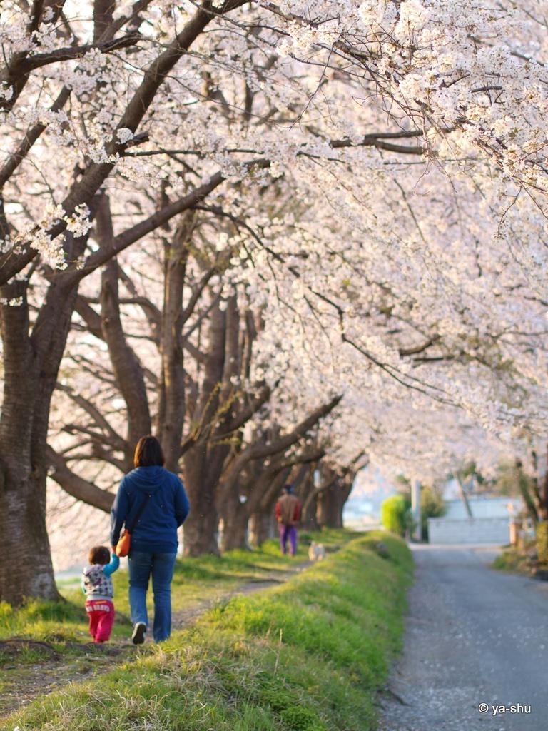 ピンクの散歩道♪