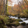 秋の奥入瀬