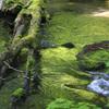苔色の流れ