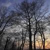 森の手招き