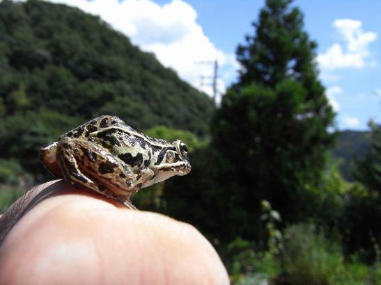 自然を見つめるカエル