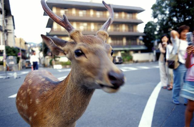 猿沢池・鹿