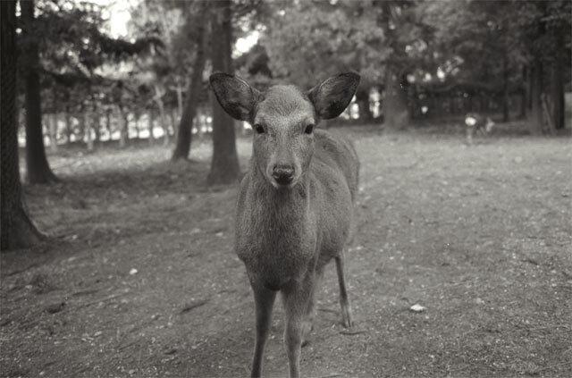 鹿さん登場