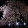 桜撮る人々