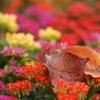 fall in ...