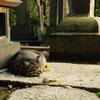 猫肥ゆる秋