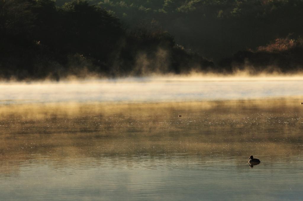 精進湖Ⅱ 早朝を行く