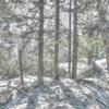 残雪の尾瀬