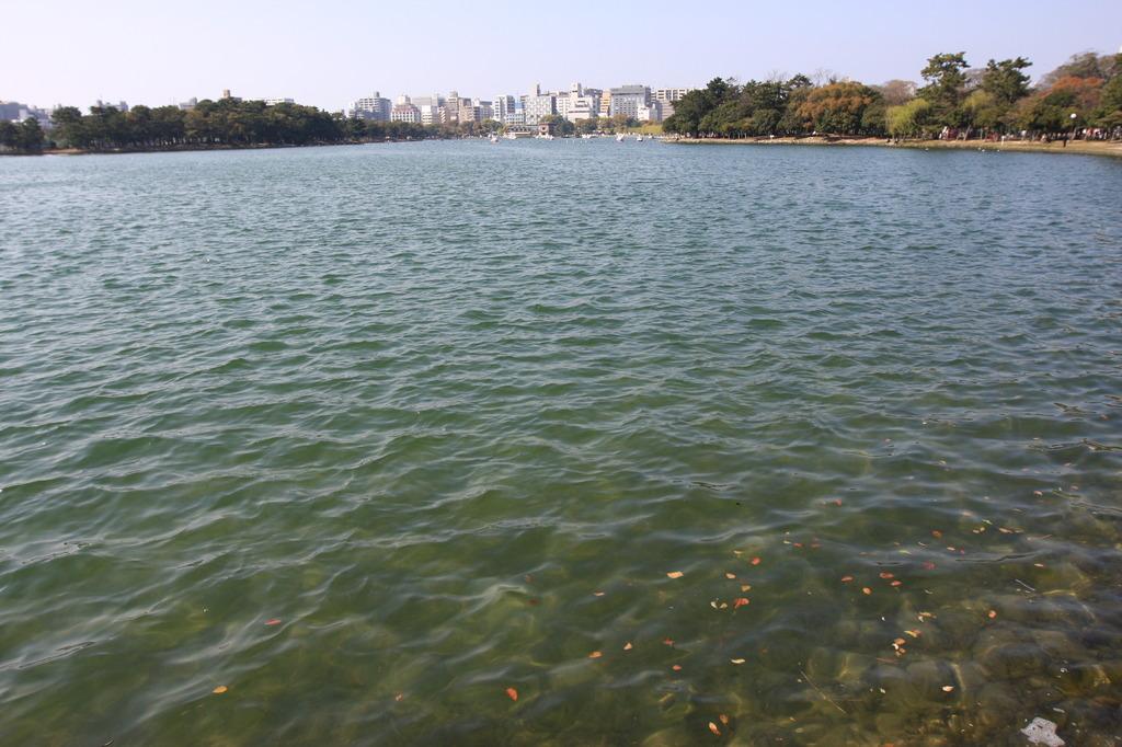湖畔の都市