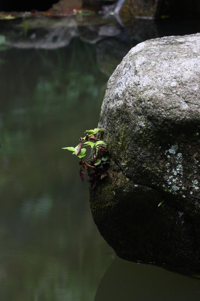 石の横でも三年