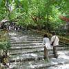 新緑の龍安寺