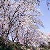 待ちわびた春