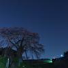 不動桜夜景