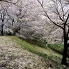 さくらの咲くころ