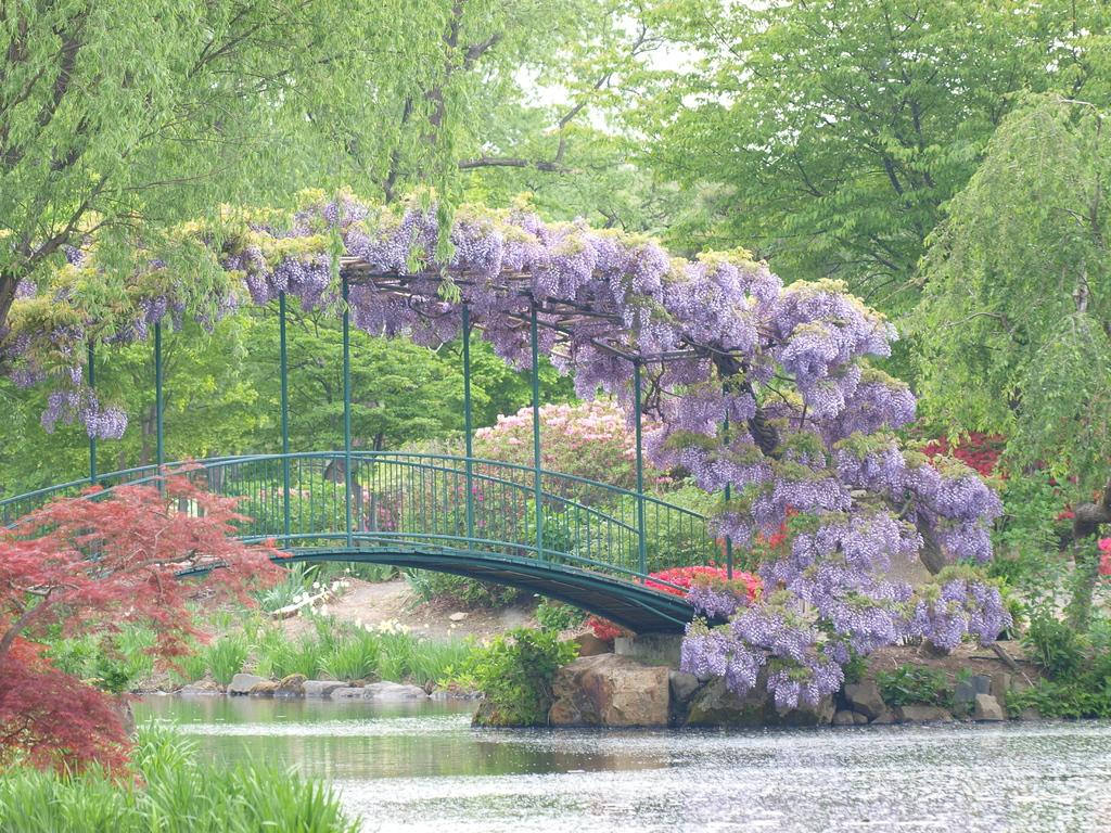 藤棚のある橋
