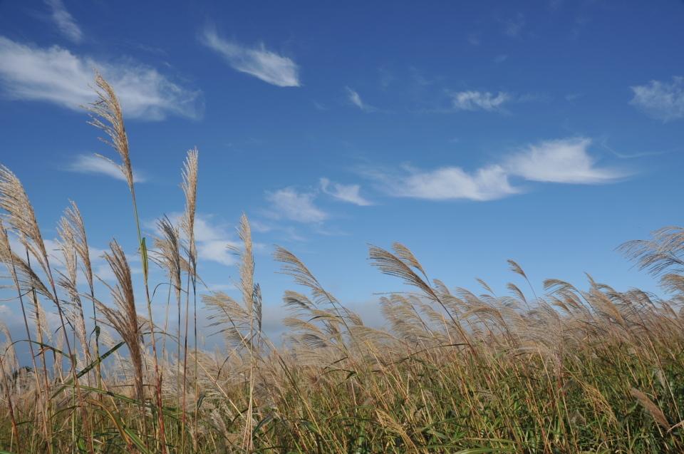 風の高原・秋