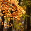 秋の四色 橙