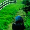 緑深き草原