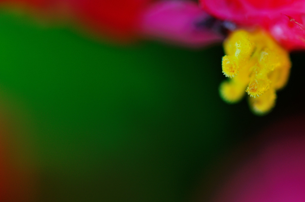 Micro waterdrops