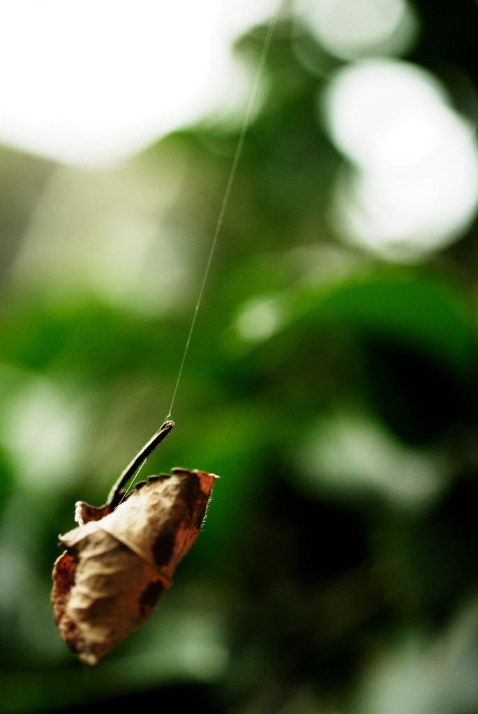 蜘蛛が差しのべた手