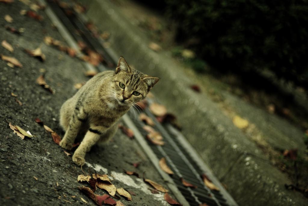 Cats in Nostalgie