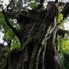 ぐにゃぐちゃの木