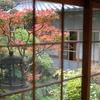 ガラス越しのプチ紅葉