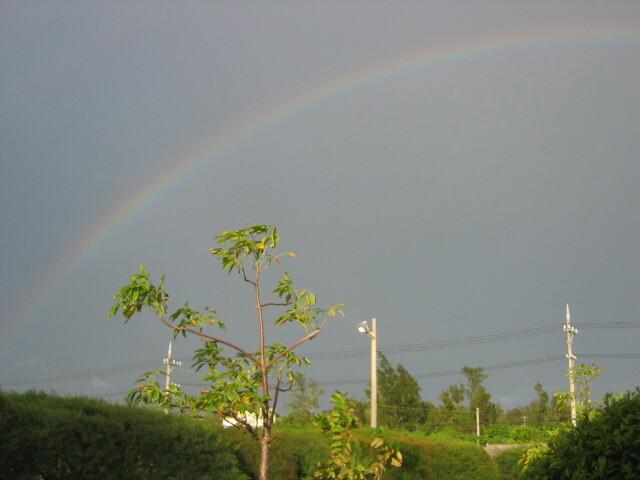 あっ、虹だ